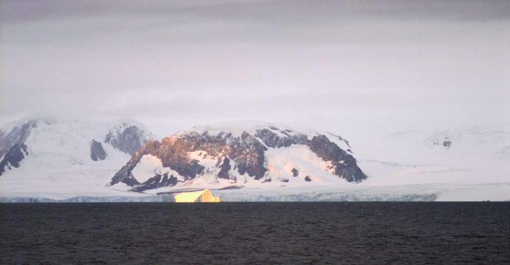 L'Antarctique plus vert que jamais