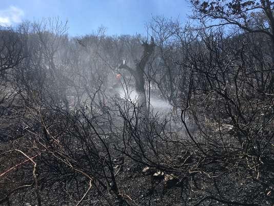 Au troisième jour d'incendies, 10 000 personnes évacuées dans le Var, accalmie en Haute-Corse - Le Monde