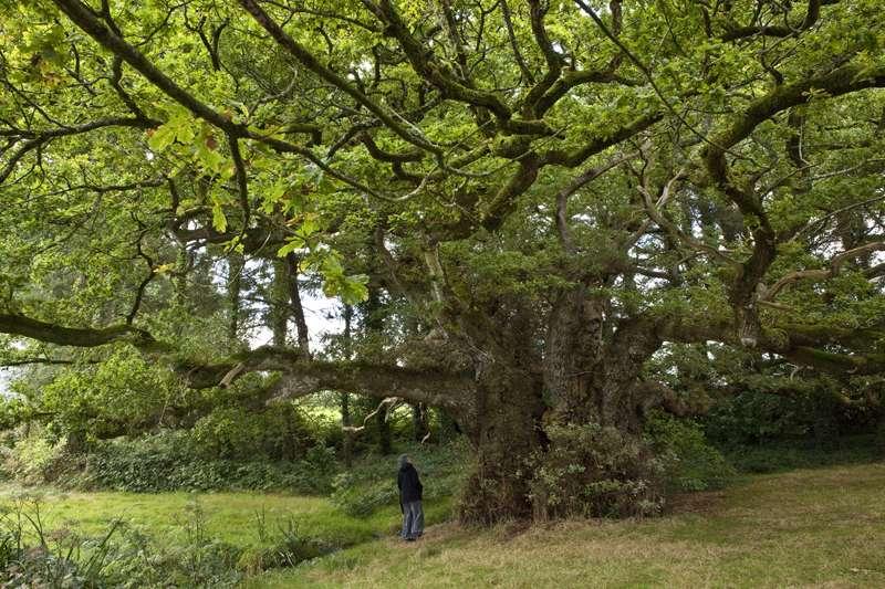 Climat : selon le Cern, les arbres influent sur la formation des nuages