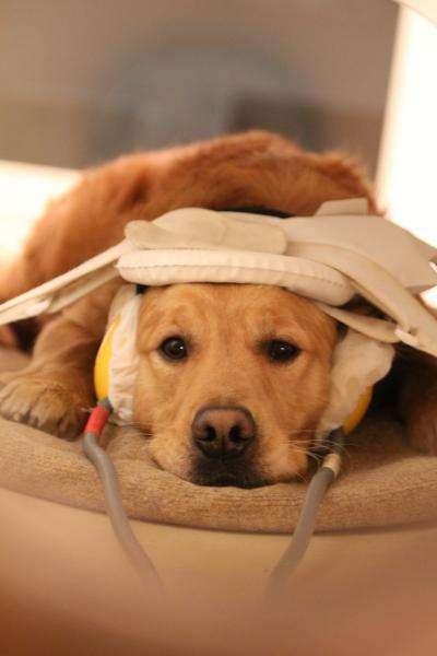 Science décalée : pourquoi le chien est-il le meilleur ami de l'Homme ?