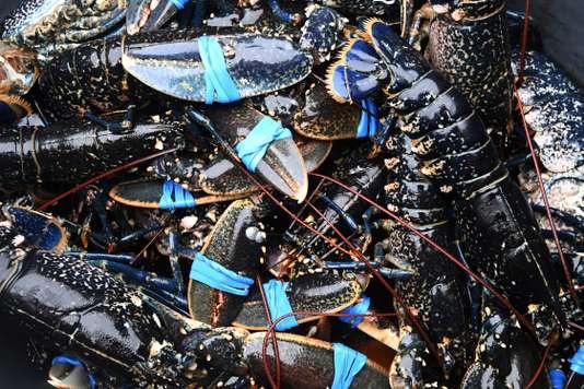 La Suisse interdit la plongée dans l'eau bouillante des homards vivants - Le Monde