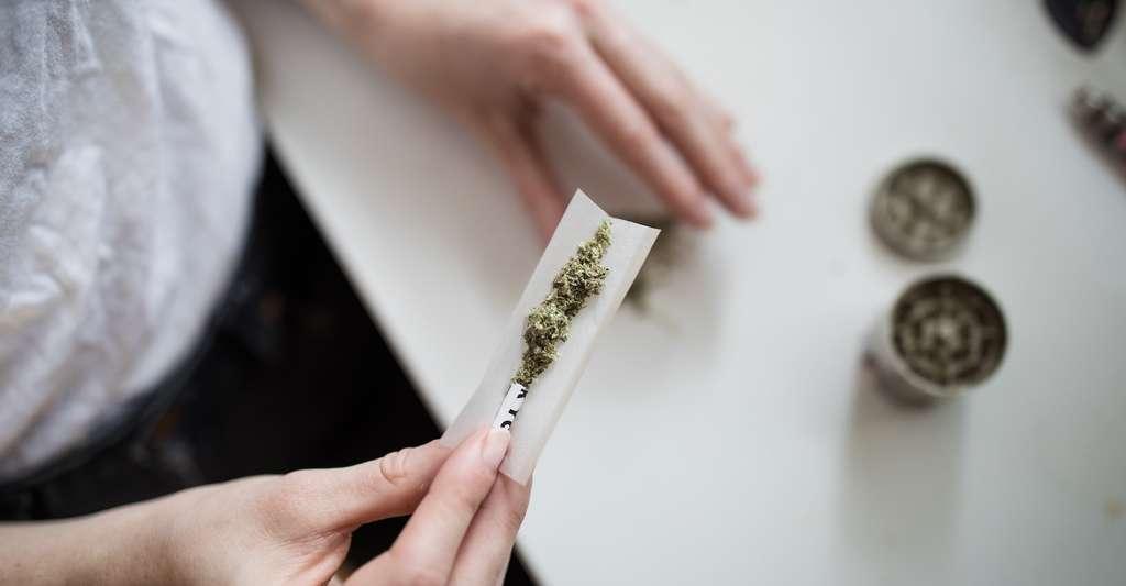 Science décalée : bientôt du cannabis pour les personnes âgées