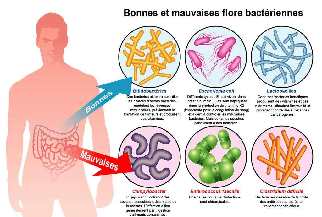 Le RV du docteur Cocaul : pour votre santé, soignez votre microbiote
