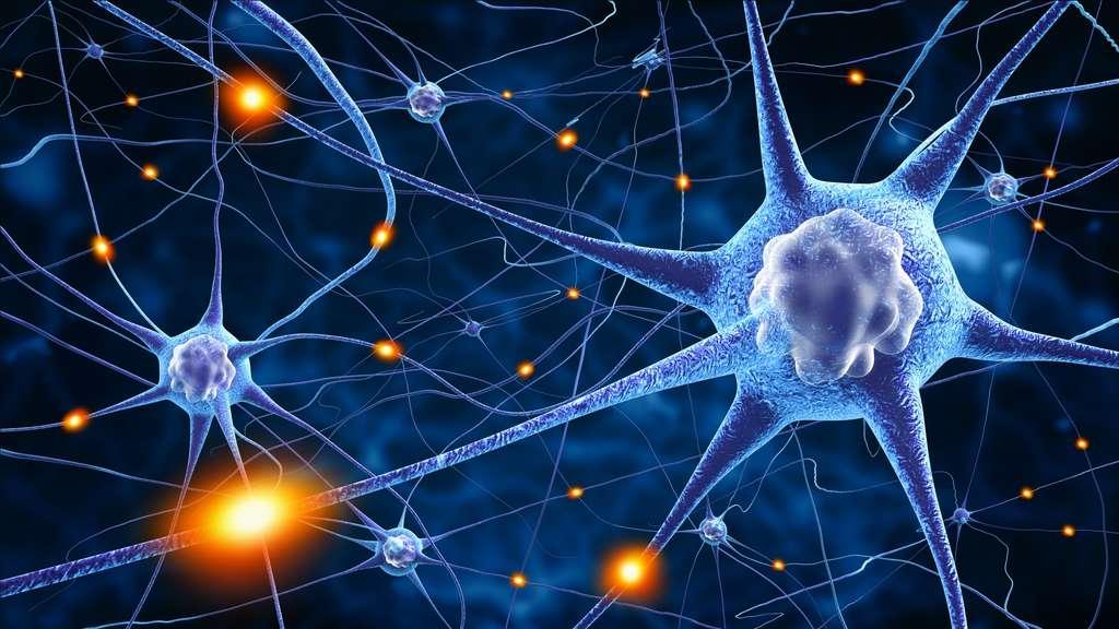 Cerveau : les seniors aussi fabriquent de nouveaux neurones