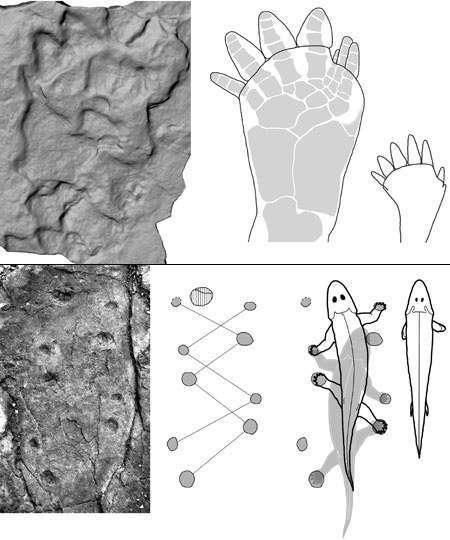 Empreintes d'animaux : les plus anciennes ont été découvertes en Chine