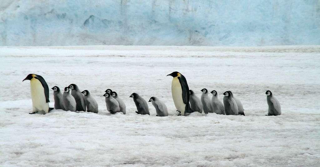 Dix ans pour sauver l'Antarctique… et le reste du monde !