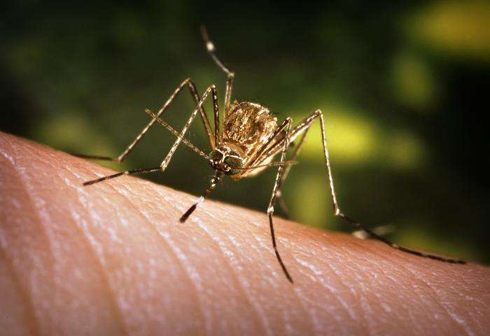 Virus du Nil occidental : une infection transmise par des moustiques en France