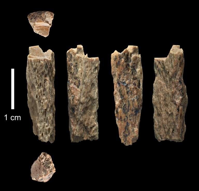 Croisement d'espèces humaines : Denny avait une mère néandertalienne et un père dénisovien