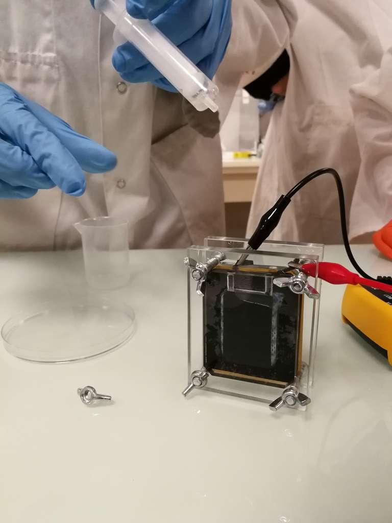 Everlux, ou comment produire de l'électricité avec de l'urine