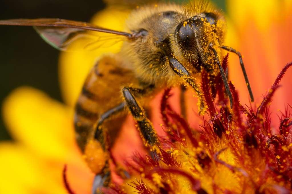 Le glyphosate serait bien un tueur d'abeilles