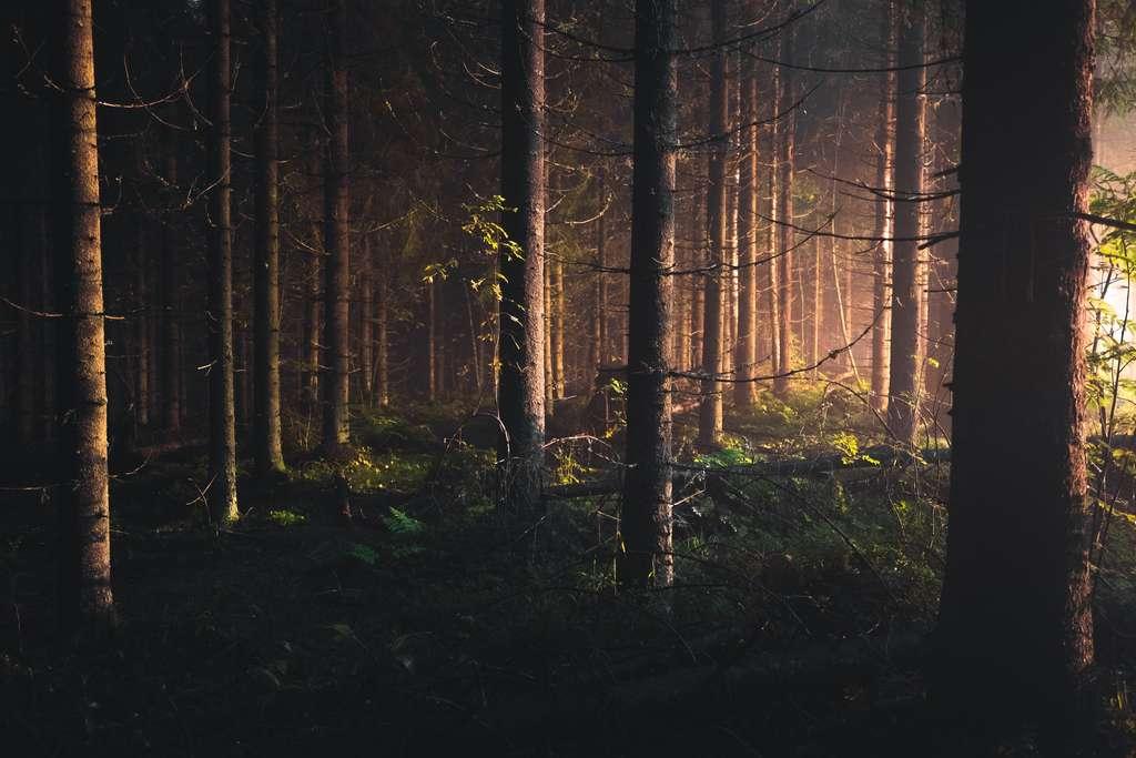 Europe : les forêts ne pourront pas freiner le réchauffement