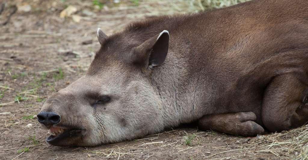 Biodiversité : plus de 60 % des animaux sauvages ont disparu depuis 1970
