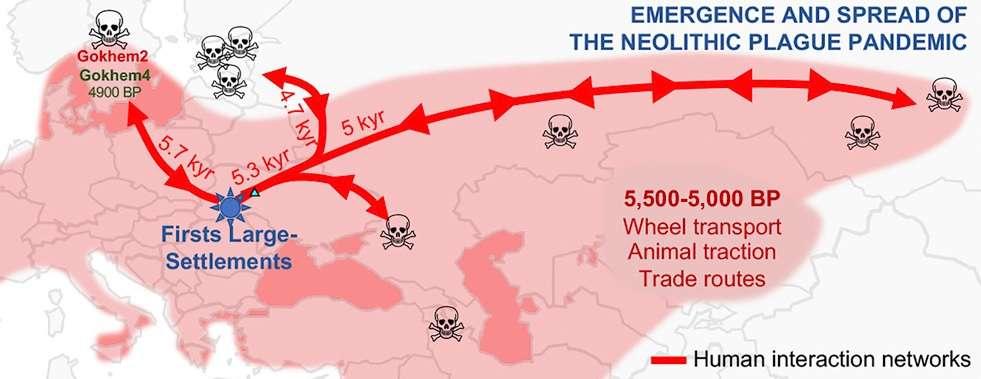 La peste aurait décimé les Européens au néolithique