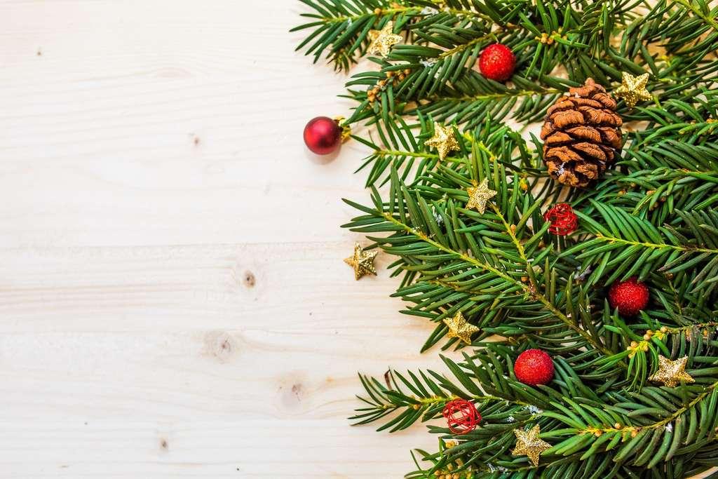 Les aiguilles de votre sapin de Noël transformées en édulcorant ou en peinture !