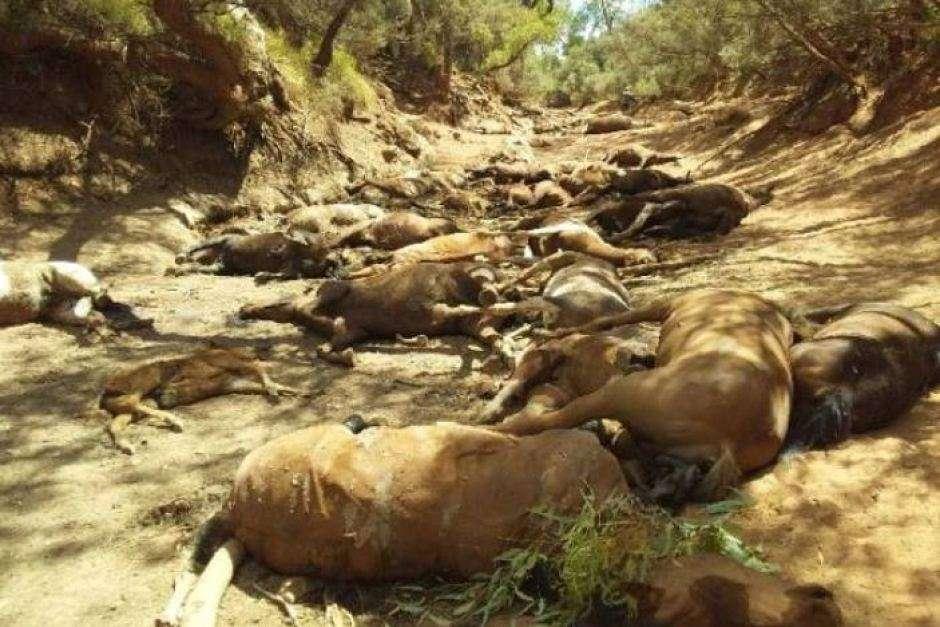 Australie : une vague de chaleur meurtrière cause la mort de milliers d'animaux
