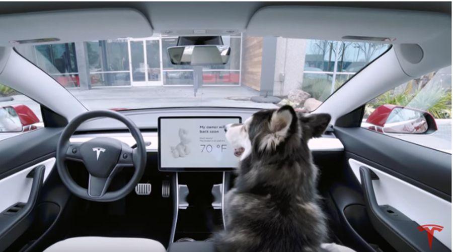 Tesla rafraîchit vos animaux de compagnie seuls dans l'habitacle