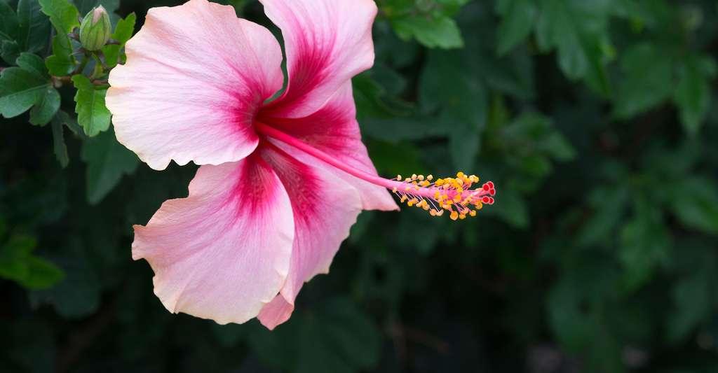 La pollinisation : un service écologique gratuit