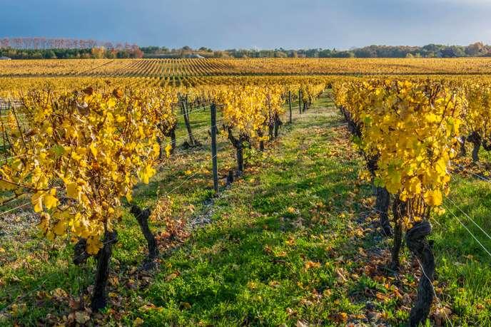 «C'est une grave erreur que de parier sur un avenir stérile pour le vin»