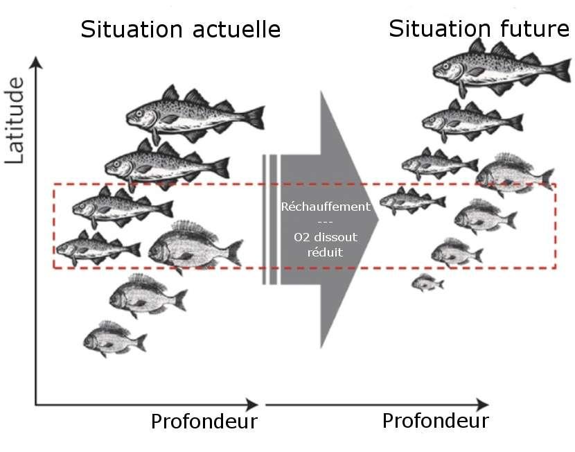 Réchauffement climatique : jusqu'à 35 % de poissons de moins dans les océans