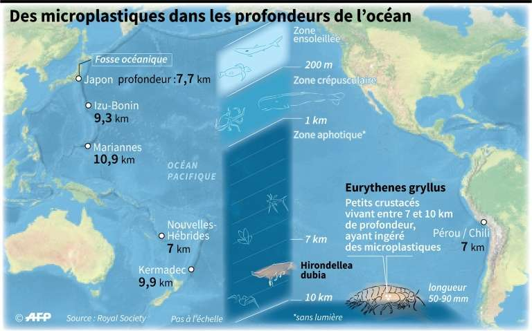 Des microplastiques retrouvés jusque dans la fosse des Mariannes