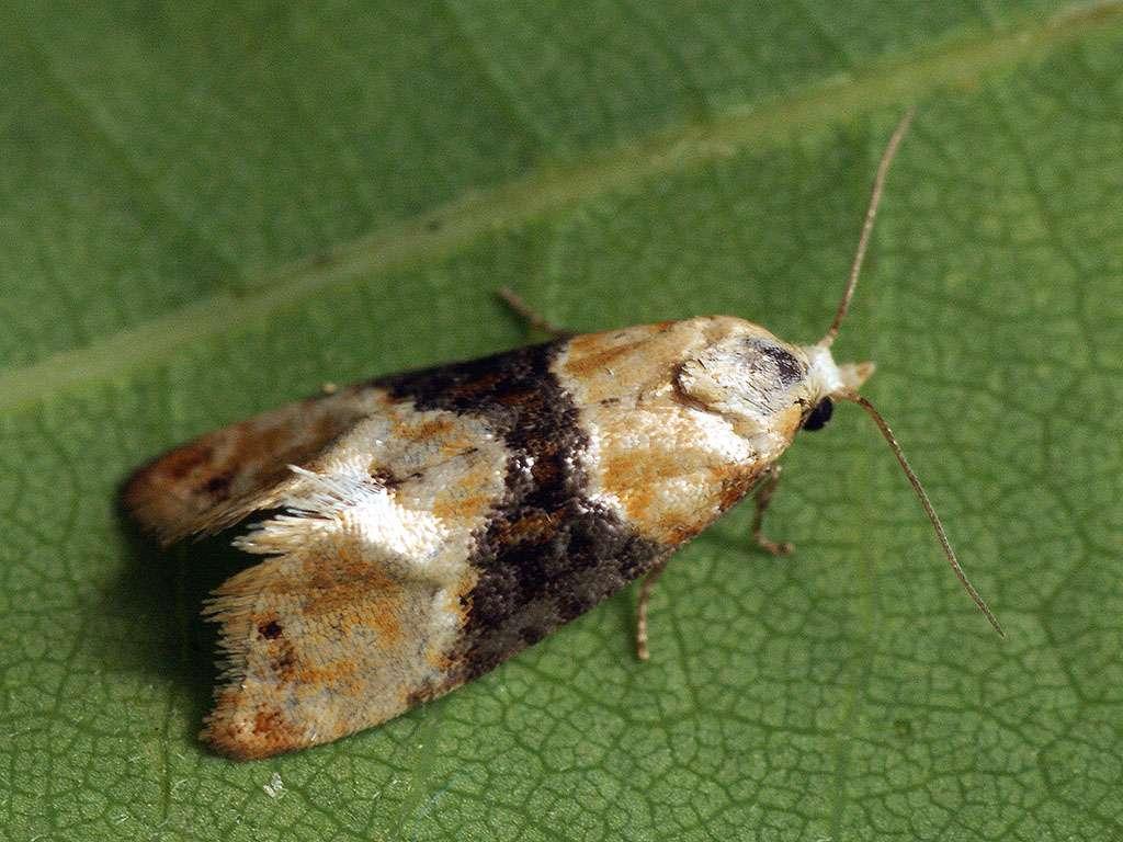 M2i : la startup française qui nous débarrasse des insectes avec ses phéromones