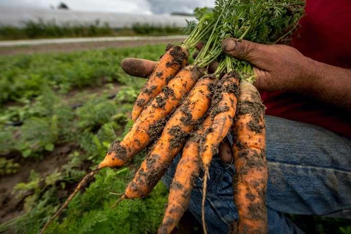 La grande bascule vers le bio de l'agriculture française