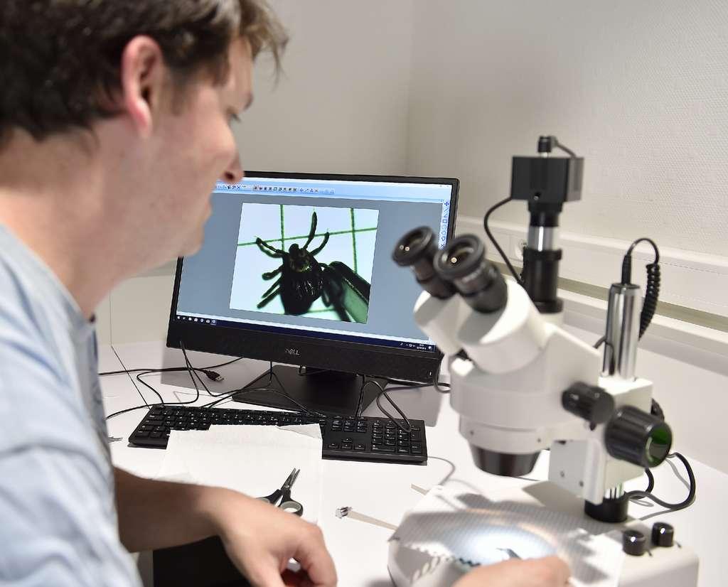 Maladie de Lyme : le nombre de nouveaux cas a augmenté en 2018 en France